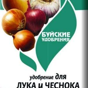 luk chesnok